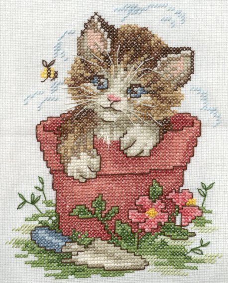Kitten-Completed January 2002
